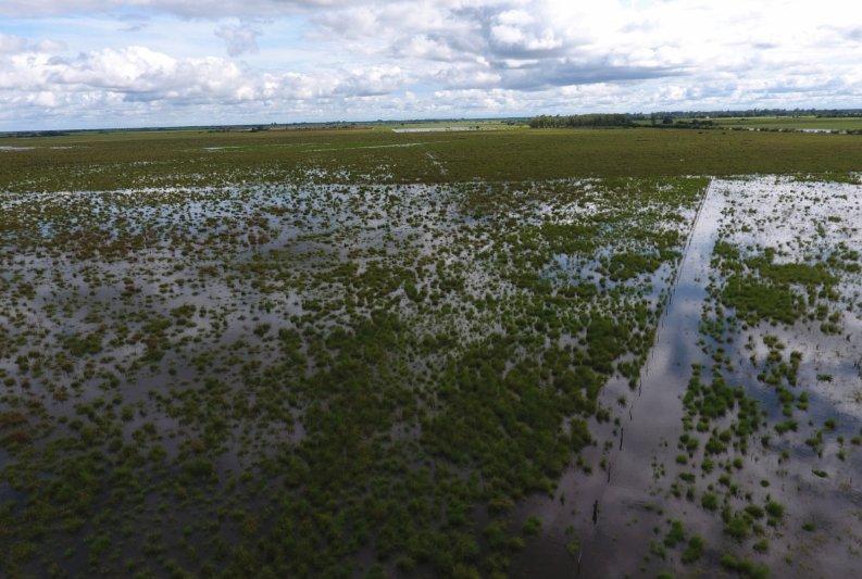 Decretaron zona de desastre agropecuario al norte santafesino